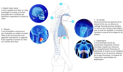Posture respiratoire Shemas sophie 1 copie copie.jpg