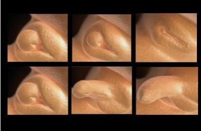 sex-1.jpg