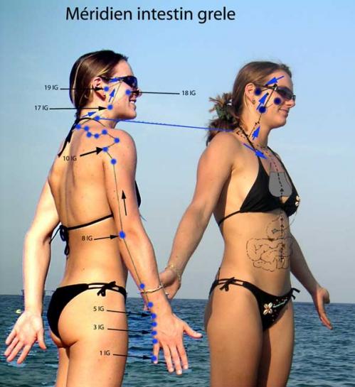 meridien-intestin-grele.jpg
