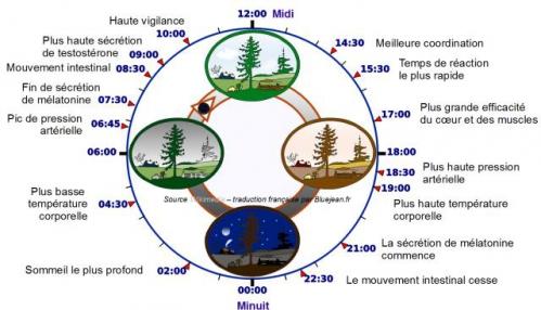 horloge-biologique.jpg