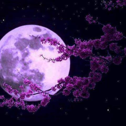 lune 4.jpg