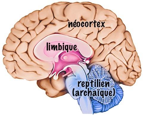 cerveauxgestionstressenfant.jpg