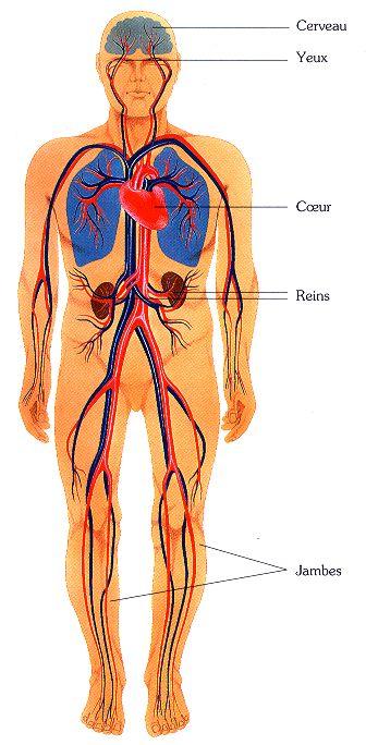 hypertension_arterielle_clip_image001_0001.jpg