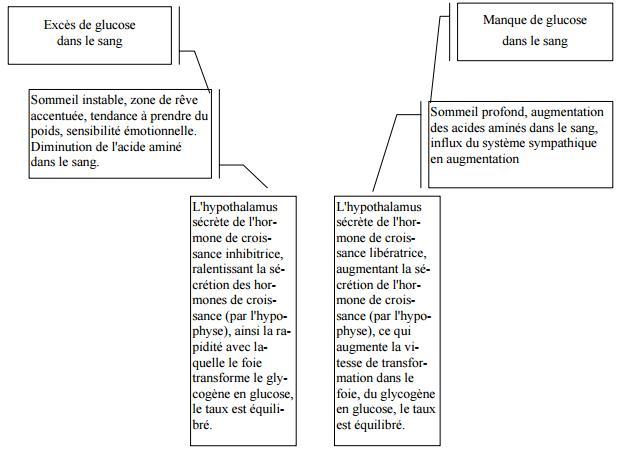 hypophyse.JPG
