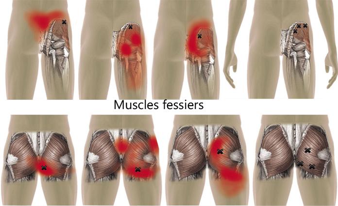 Fessiers.jpg