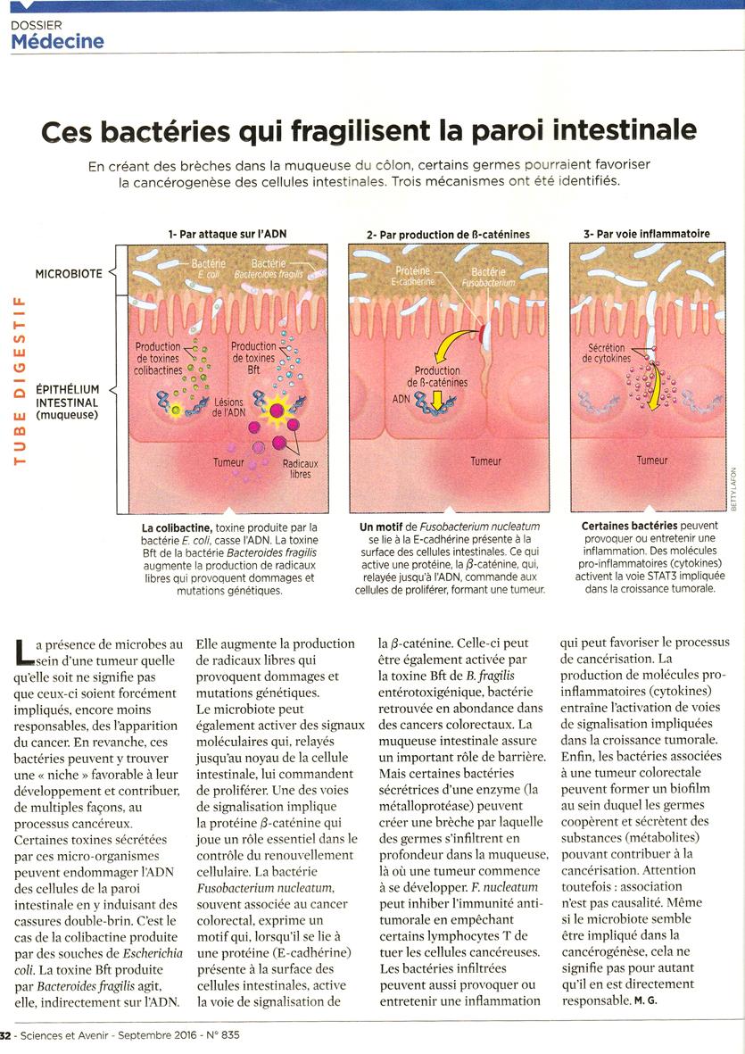 ventre et cancer1.jpg