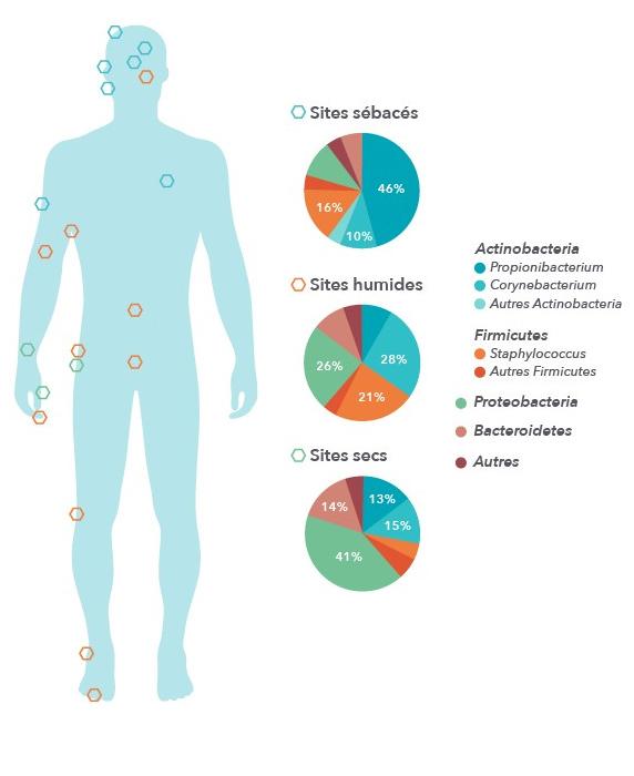 microbiote1.jpg