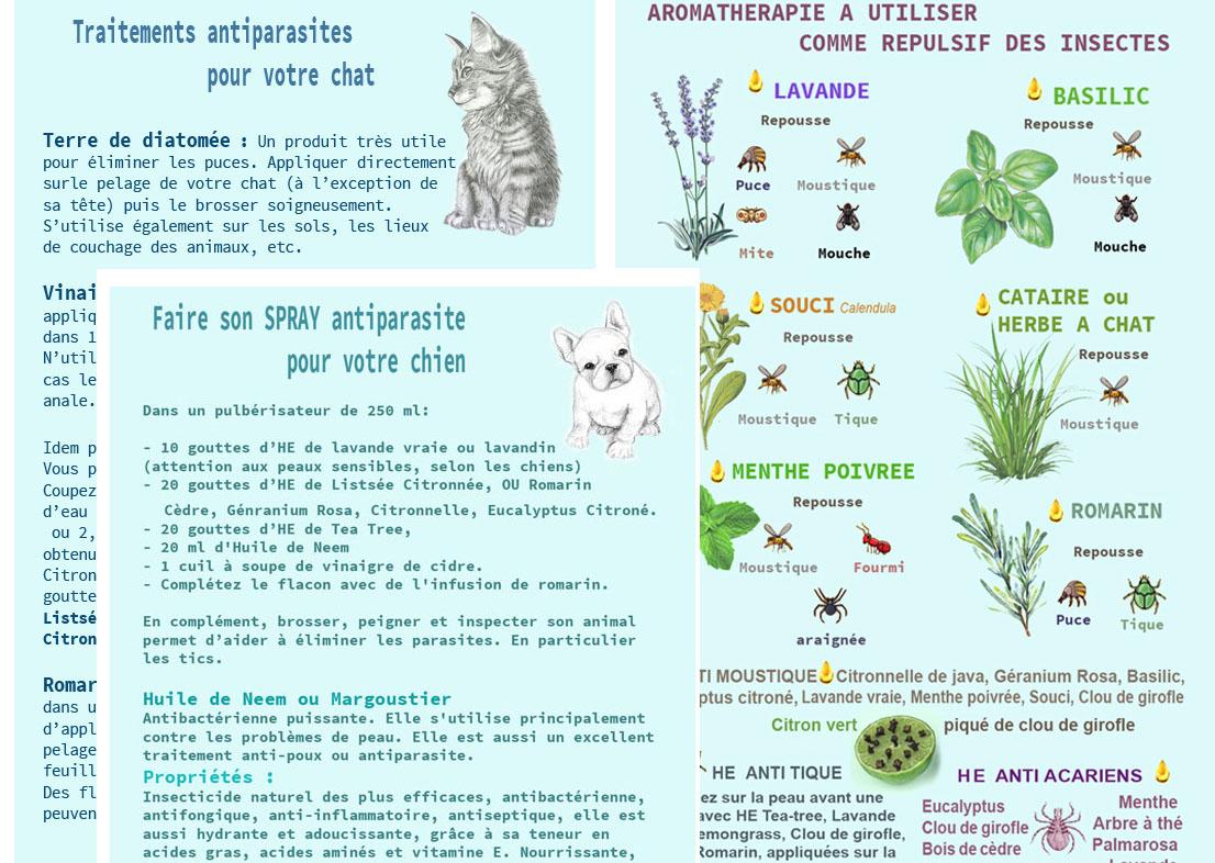 anti insectecopie.jpg