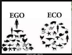 ego eco1.jpg