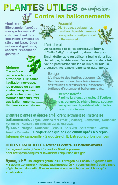 Phyto plantes ballonnement PT.jpg