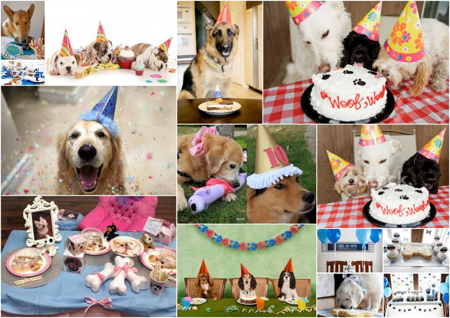 dog's party.jpg