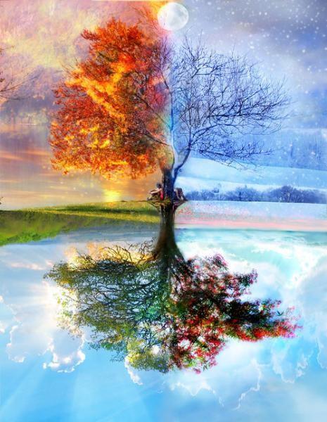 arbre saison.jpg
