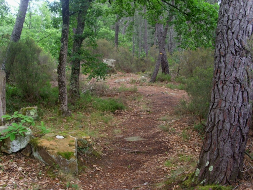 forestpath.JPG