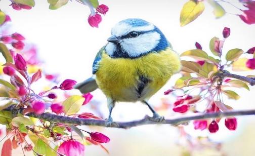 oiseau messange19 modif.jpg