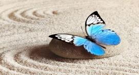 papillon zen.jpg n2.jpg