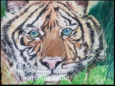tigre 2021 1.jpg redim.jpg 2fois.jpg