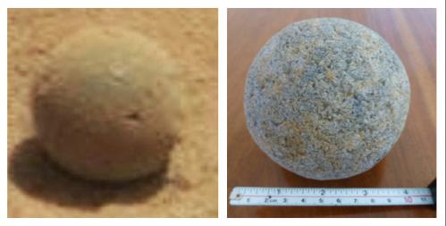fossile éponge 1.png