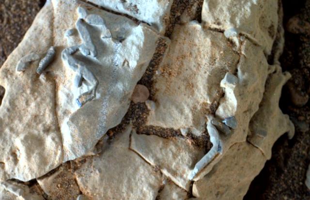 Des vers sur Mars 1.png