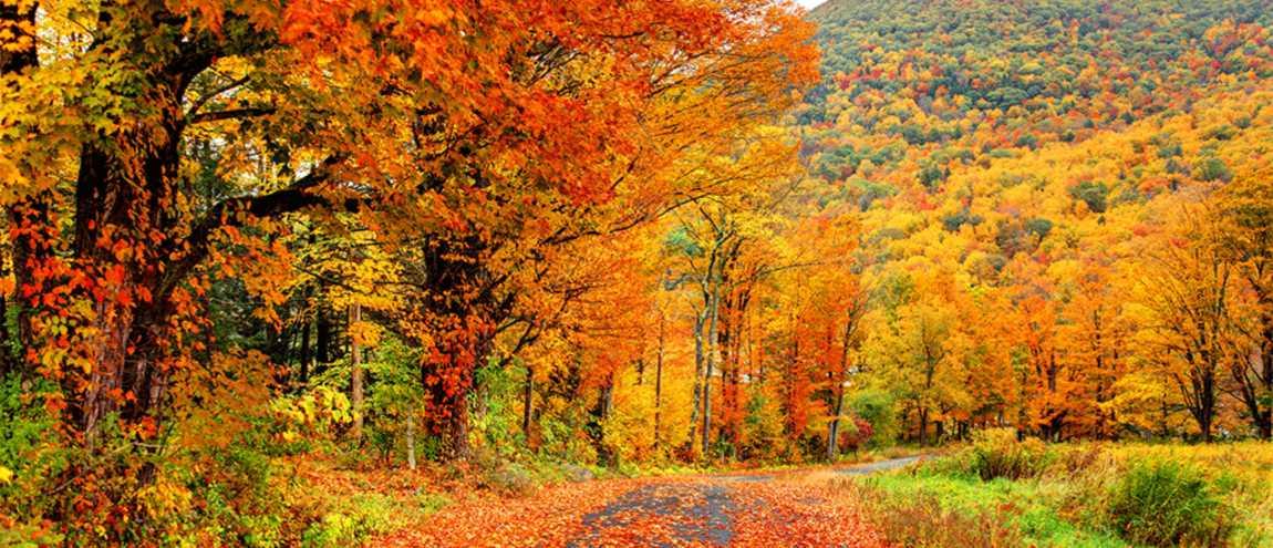 Jour d'automne.jpg