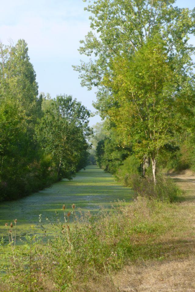 UTL grande marche Landrais canal de Charras 5 09 2018.jpg