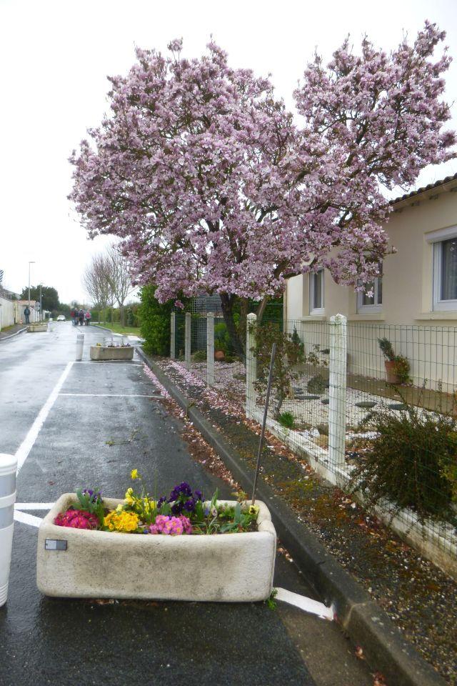 UTL grande marche Porte de Tonnay Boutonne arbre en fleurs 6 03 2019.jpg
