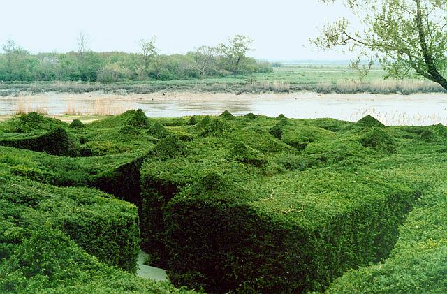 le labyrinthe végétation pointue.jpg