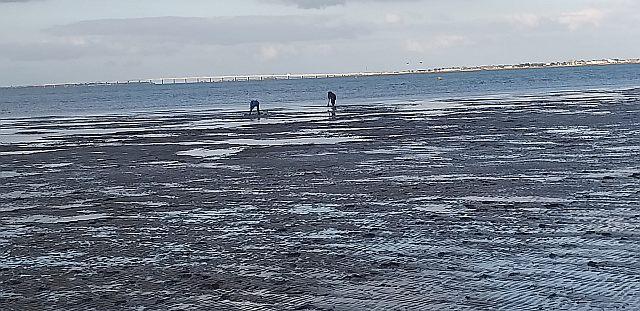UTL grande marche 5-2-2020 Pont Oléron vu de la plage de la Cepe Ronce les bains.jpg