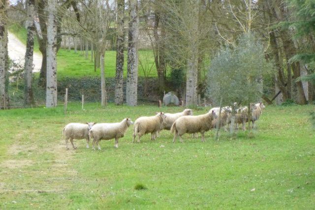 UTL grande marche 12 02 2020 les ovins Razour .jpg