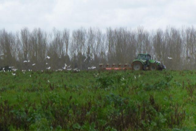 UTL grande marche 12 02 2020 le tracteur et sa traîne d'oiseaux Razour .jpg