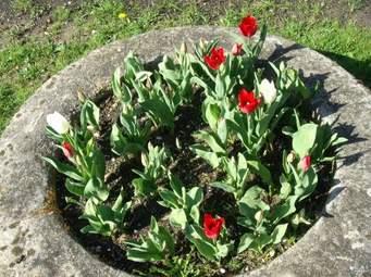 Tulipes.jpg