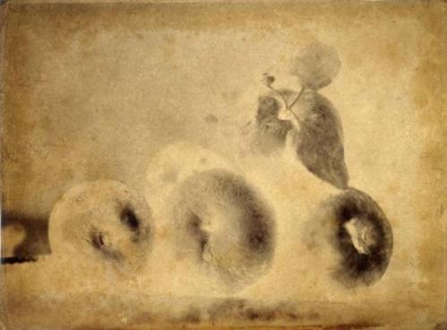 149-720-445-Nature-morte-pommes-1855-.jpg