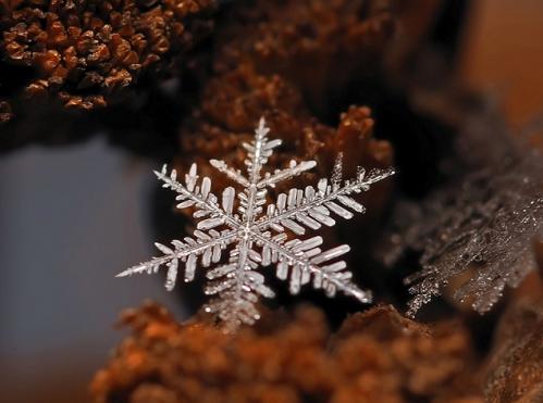 flocons-neige-loupe-macro-photographie-wikilinks-2.jpg
