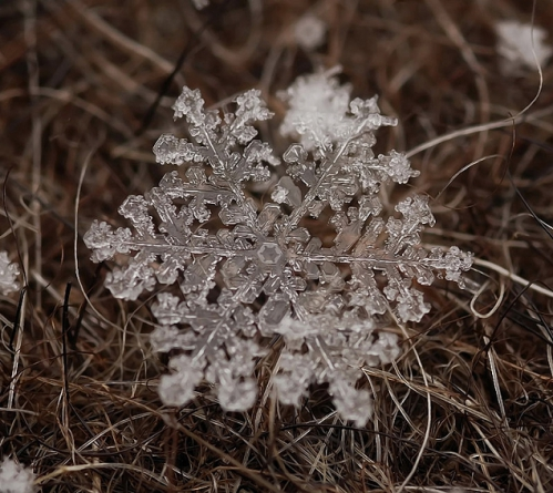 flocons-neige-loupe-macro-photographie-wikilinks-121.jpg
