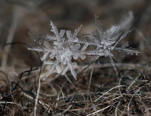 flocons-neige-loupe-macro-photographie-wikilinks-201.jpg