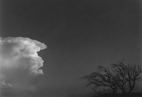 CloudandTreeNewMexico1980copy.jpg