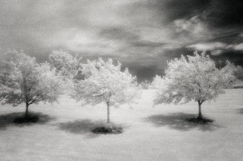 3_Trees_1-500x334.jpg