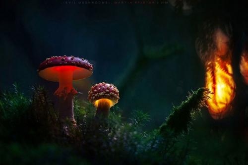 champignon-clou.jpg