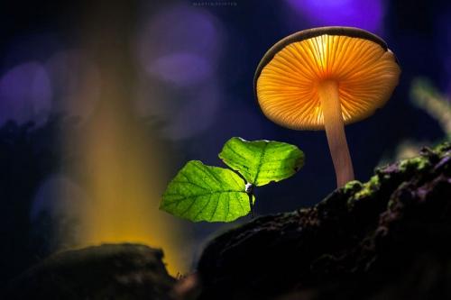 champignon-feuille-coloré.jpg