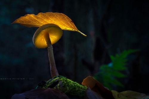champignon-feuille-lumineuse.jpg