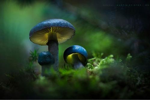 champignons-bleus.jpg