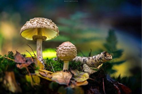 champignons-bois.jpg