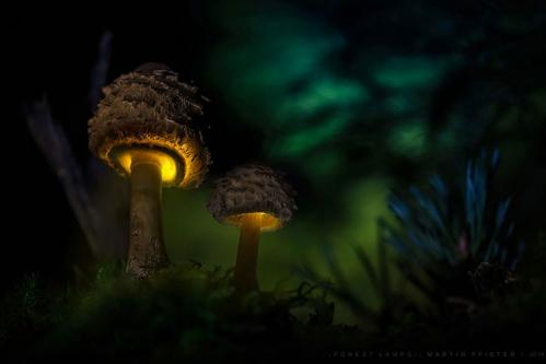 champignons-lumiere.jpg