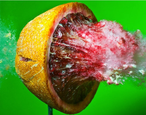 Alan-Sailer-photography-art-fruit-thesuiteworld.jpg