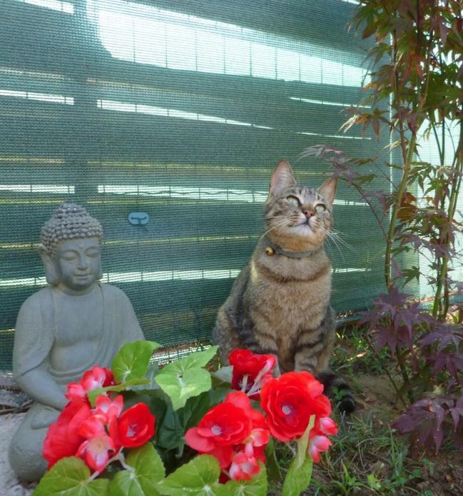 chat soleilvie.jpg
