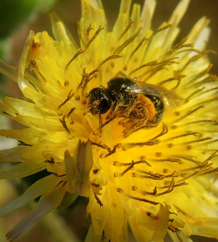 l'abeille.jpg