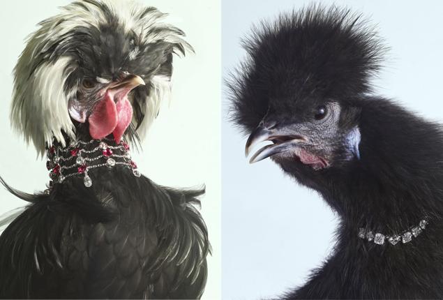 chicken2.jpg