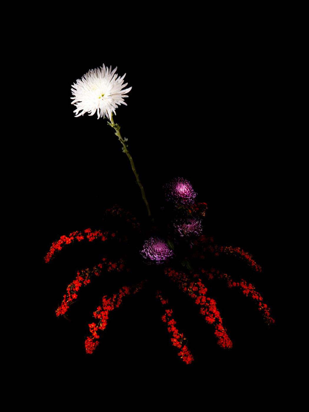 sarah-illenberger-flowerwork-03.jpg