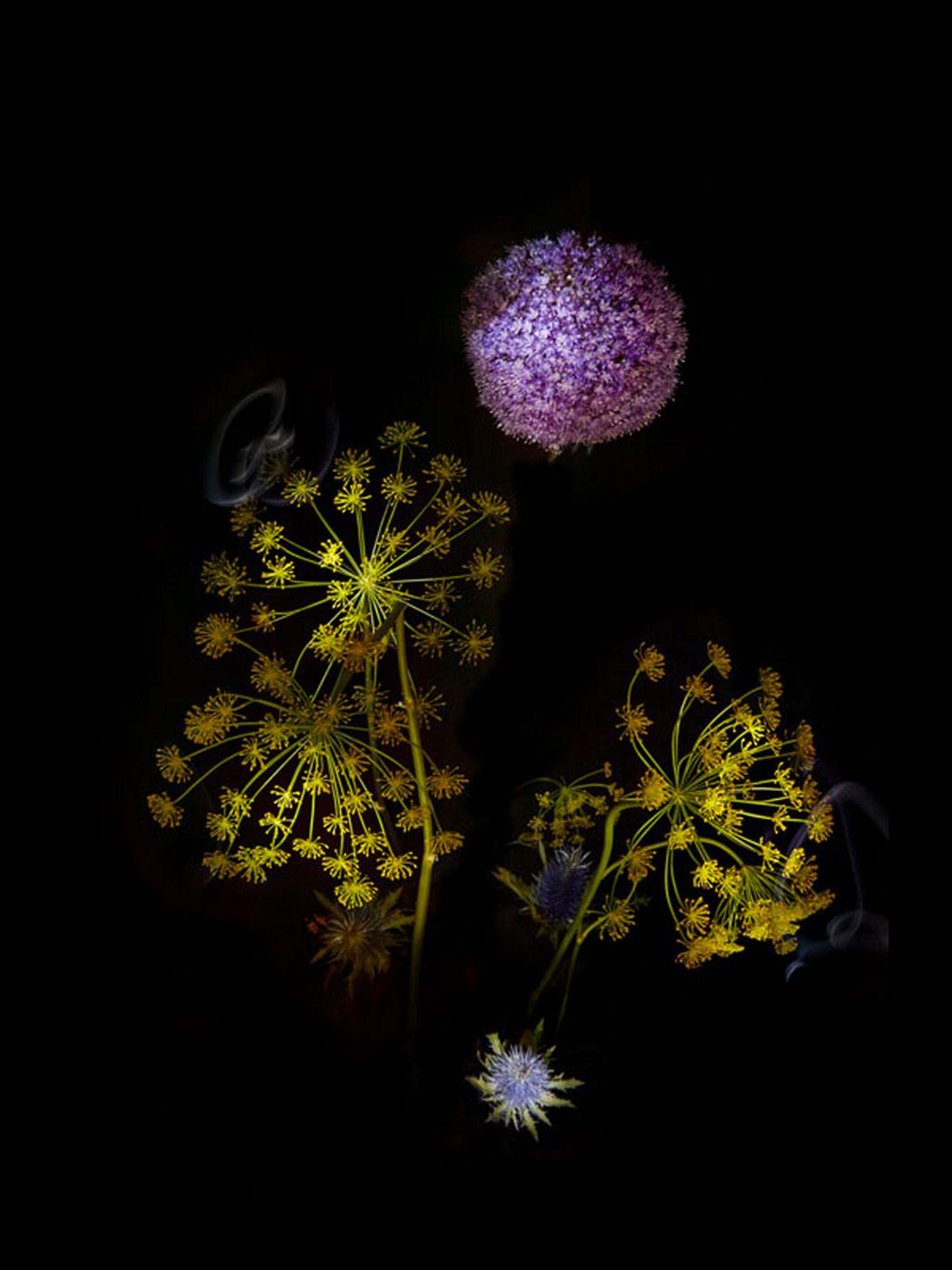 sarah-illenberger-flowerwork-06.jpg