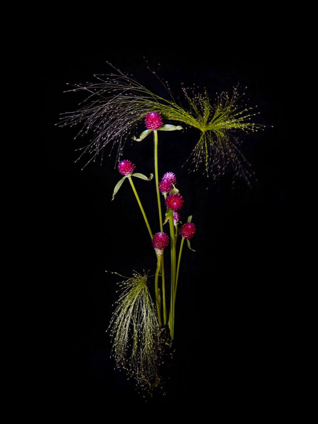 sarah-illenberger-flowerwork-08.jpg