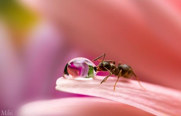 macro-fleurs-insectes-jardin-photographe-miki-asai-05.jpg